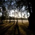 New-Forest-2111.jpg