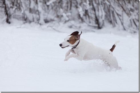 Snow-1259
