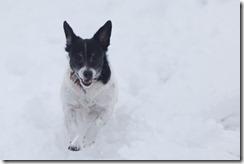 Snow1-1543